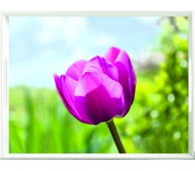 EMSA CLASSIC podnos, 50x37cm - tulipány - EMSA